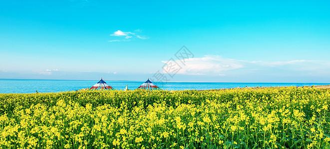 青海湖畔油菜花图片