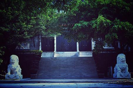 门前台阶绿荫下图片