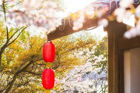 樱花季图片大全