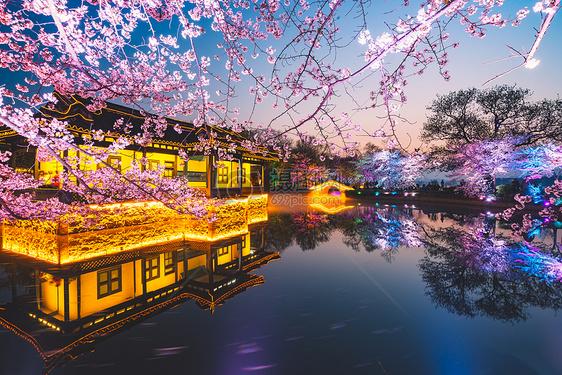 无锡鼋头渚多彩樱花图片