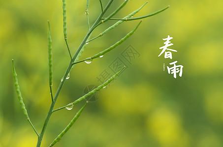 春雨贵如油图片