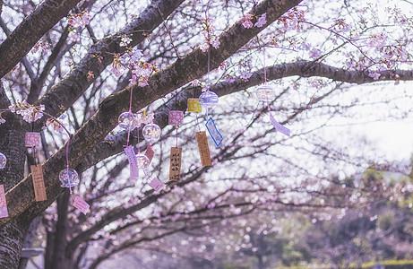 风铃樱花图片
