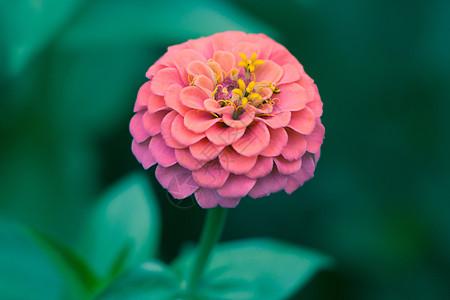 一朵花图片_一朵花素材_一朵花高清图片_摄图网图片