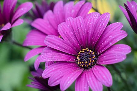 沾满雨露盛开的花朵图片