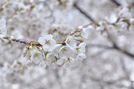 玉渊潭的春天图片