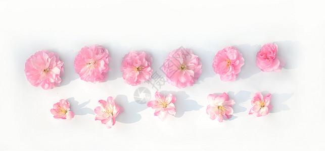 春天樱花花瓣图片