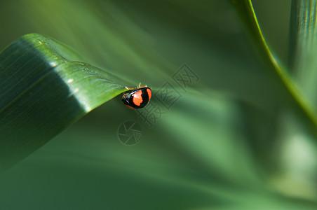 瓢虫在树叶上图片