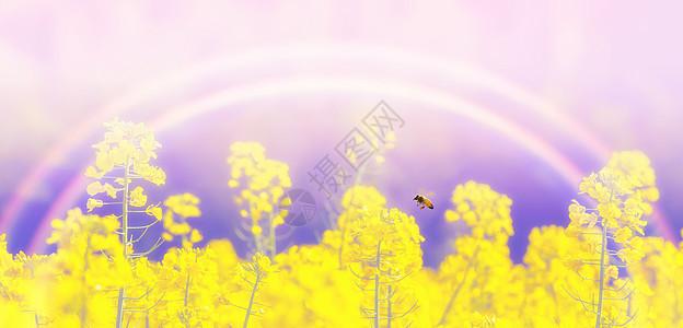 花卉蓝天背景图片