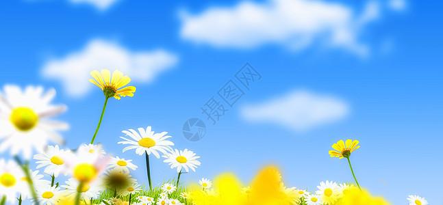 碎花图片素材_蓝色天空下的向日葵高清图片下载-正版图片500528716-摄图网