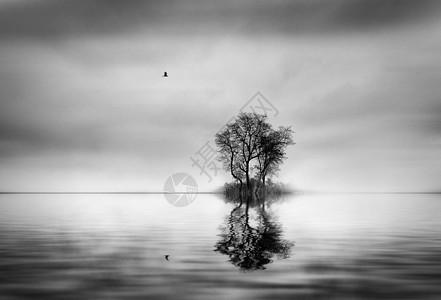 飞鸟和树在水中的倒影图片
