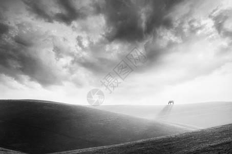 草原上云下的马图片