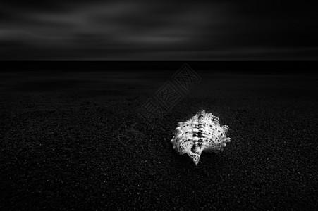 海边沙滩上的海螺图片