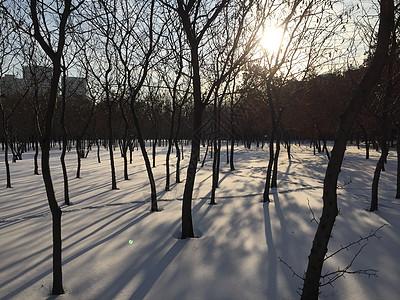 冬日夕阳下的雪地图片