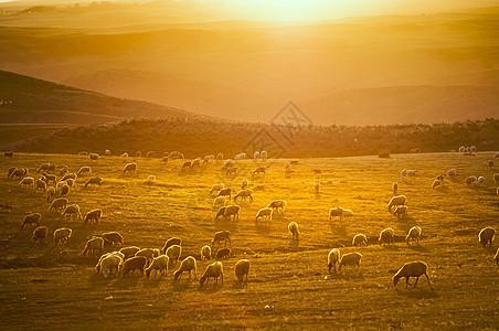 阳光牧场图片