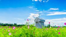 花丛中的风车图片