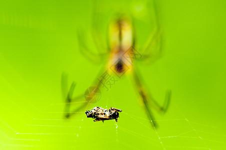 捕获猎物的蜘蛛图片