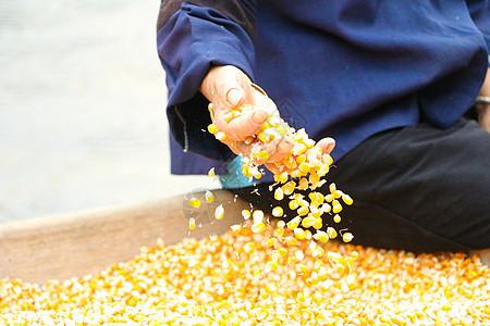 云南世外桃源晒玉米的老人图片