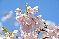 春日气息图片