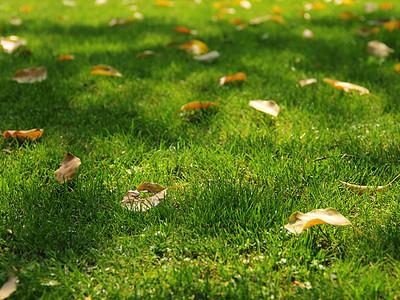 草坪与落叶图片