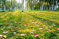 草地落叶树木森林图片