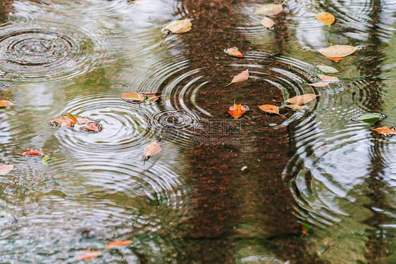 水中涟漪落叶图片