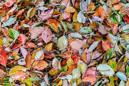 落叶平铺拍摄图片