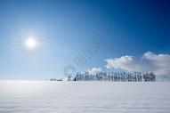 白素雪景下的树图片