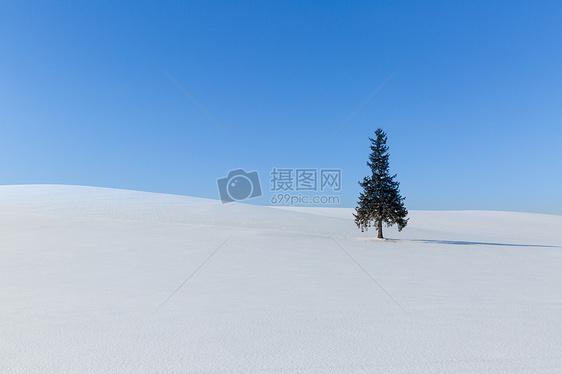 沙漠里的一颗树图片