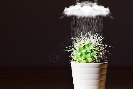 雨中的仙人球盆栽图片