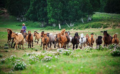 大草原上策马奔腾图片