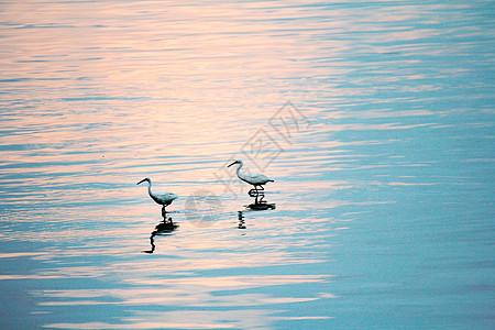 优雅的水鸟图片