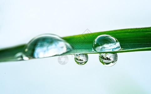 谷雨过后的水珠图片