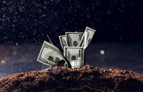 种在土地里的钞票图片
