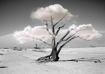 枯萎的一棵树图片