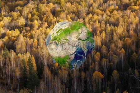 森林中的地球图片
