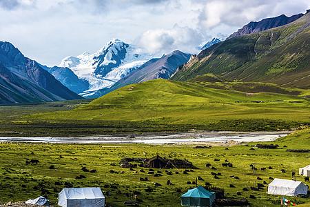 雪山牧歌图片