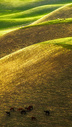 吐尔根杏花沟图片
