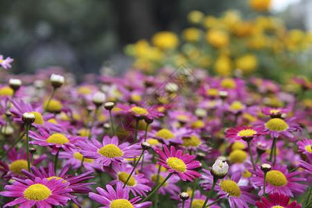 路边的野花百花齐放图片