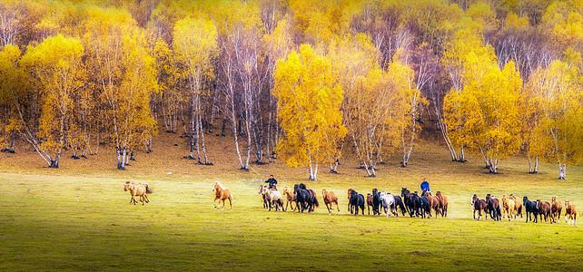 驰马草原图片