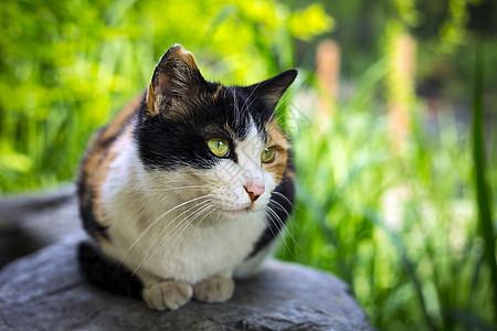 春天的一只猫图片