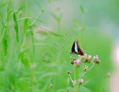蝴蝶飞飞图片