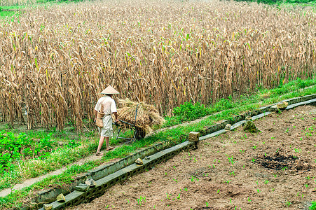 农民在田中图片