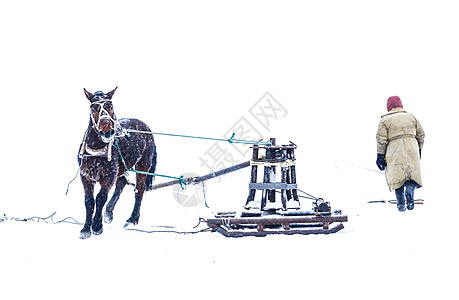 中国北方雪地马拉车图片