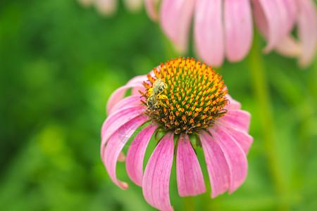 多彩的花朵图片