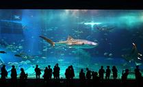 日本冲绳海洋馆图片