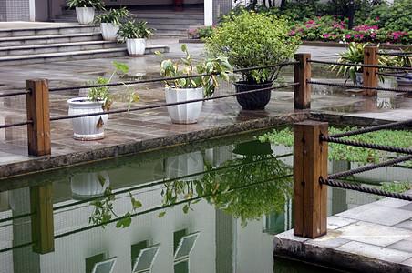 雨后的池塘图片