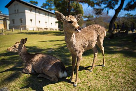 京都奈良的小鹿图片