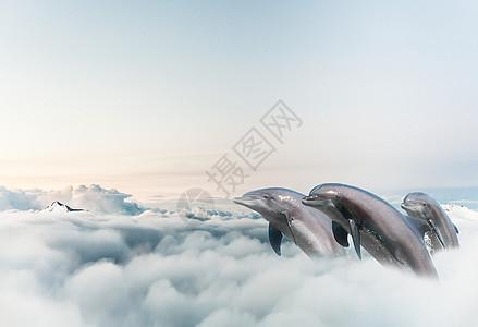 云中海豚图片
