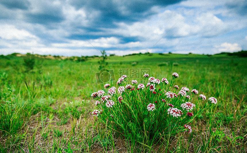 标签: 狼毒花清新绿色自然风光鲜花草原沉寂旷野广阔大