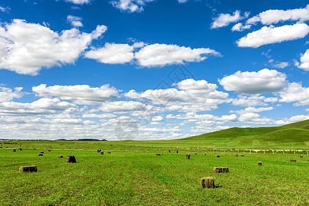 蓝天白云和草原图片